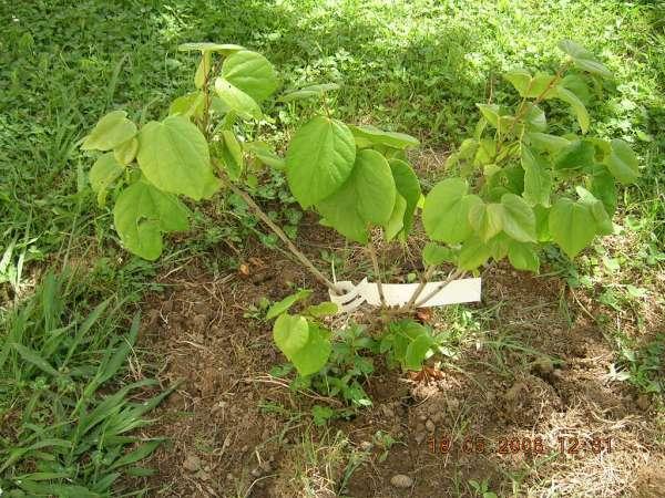 Subdivisión: Angiospermas (plantas con flores, semillas recubertas)